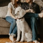 The Importance of Pet Nail Care